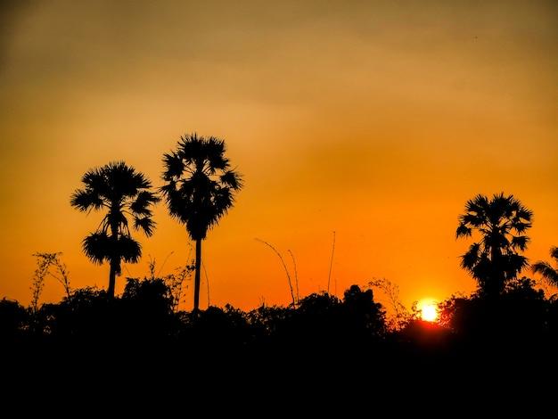 Het mooie oranje verbazende landschap van de zonsondergangaard met de achtergrond van het palmensilhouet