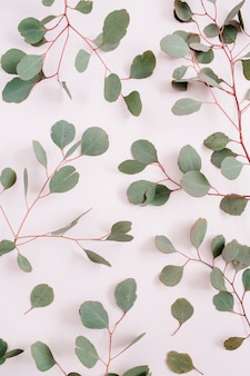 Het mooie patroon van eucalyptustakken op bleke pastelroze achtergrond. platliggend, bovenaanzicht