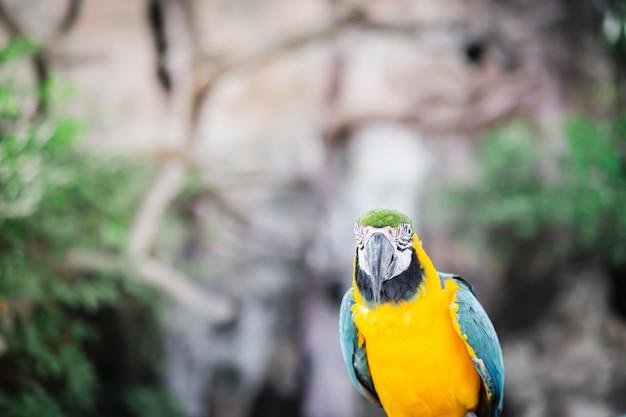 Het mooie portret van de arapapegaai, vogel in de tuin.