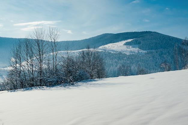 Het mooie sneeuwbos van het de winterberglandschap