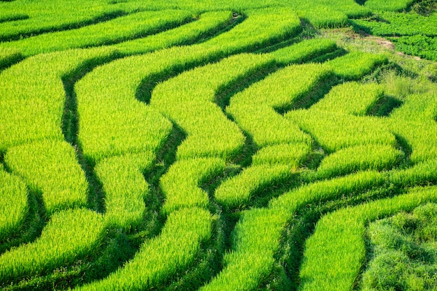 Het mooie van groene terrasvormige rijstvelden.