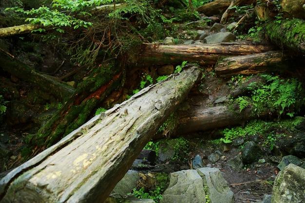 Het mos bedekte rotsen en omgevallen bomen een oud bos