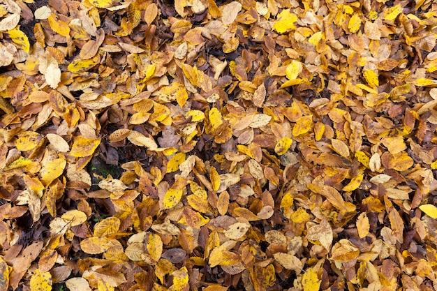 Het natte gebladerte van loofbomen die op de grond liggen, sommige bladeren zijn recentelijk afgevallen, terwijl andere al lang op de grond liggen en begonnen te rotten