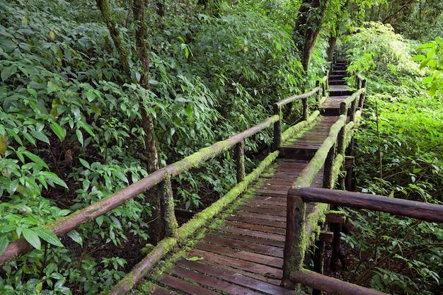 Het natuurpad van het regenwoud.