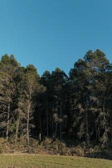 Het ogenniveau schoot hoge bomen met heldere hemel