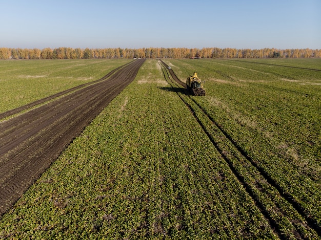 Het oogsten van de machineshoogte van het suikerbietgebied tijdens dag