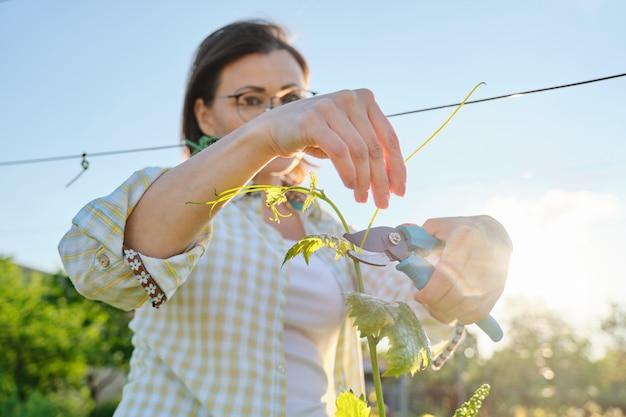 Het openluchtportret van de lente van vrouw die in wijngaard werkt