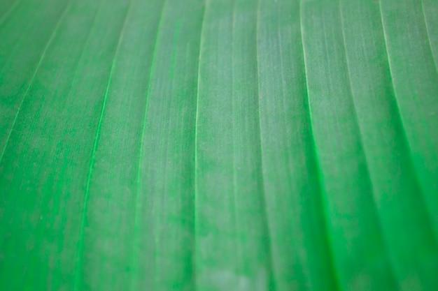 Het oppervlak van een groot gestreept vel. groene achtergrond en behang. groei textuur