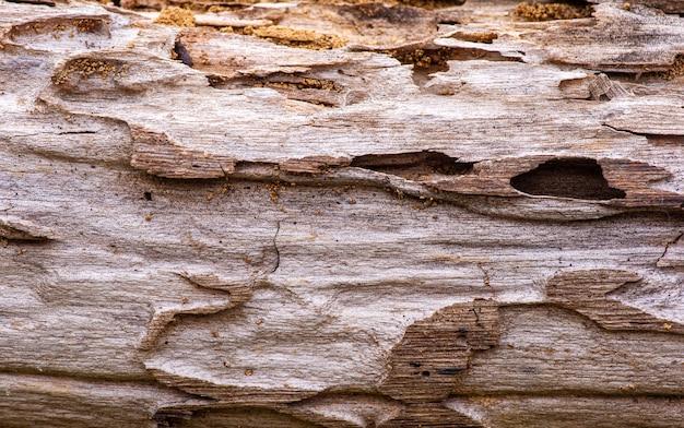 Het oppervlak van een oud teakhout voor natuurlijke achtergrond, in ondiepe focus