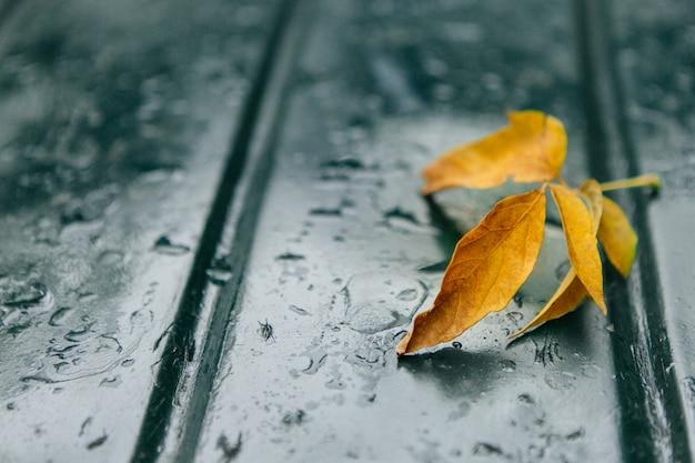 Het oranje blad van de herfst op een autokap in de regen