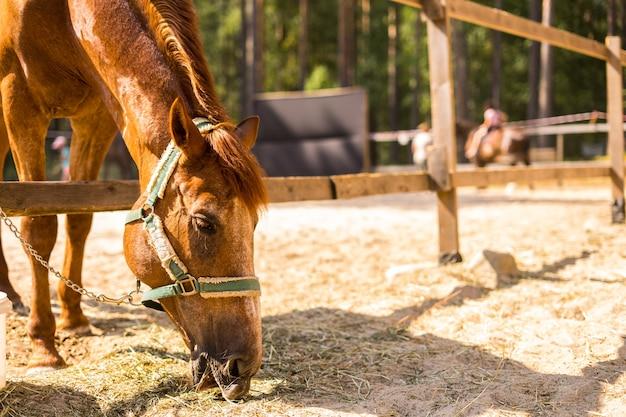 Het paard eet gras uit de trog op de boerderij