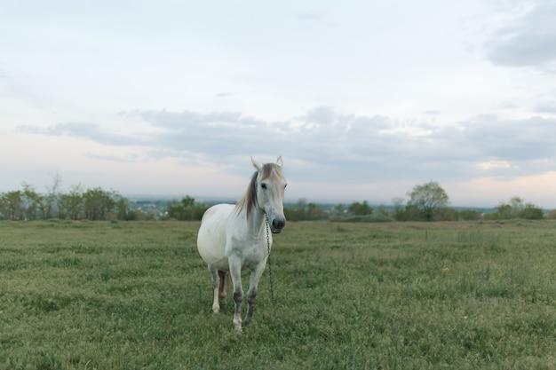 Het paard graast op een groen gazon bij bewolkt weer. bewolkte lucht.