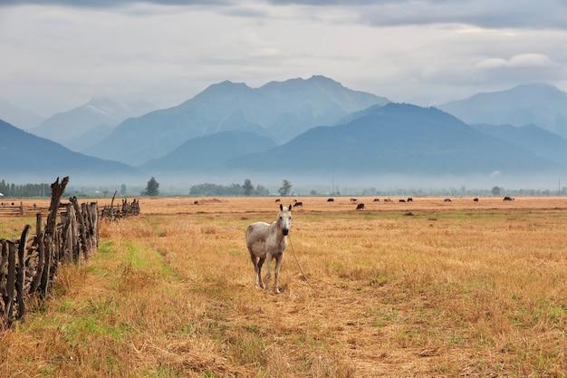 Het paard in kaukasische bergen, azerbeidzjan