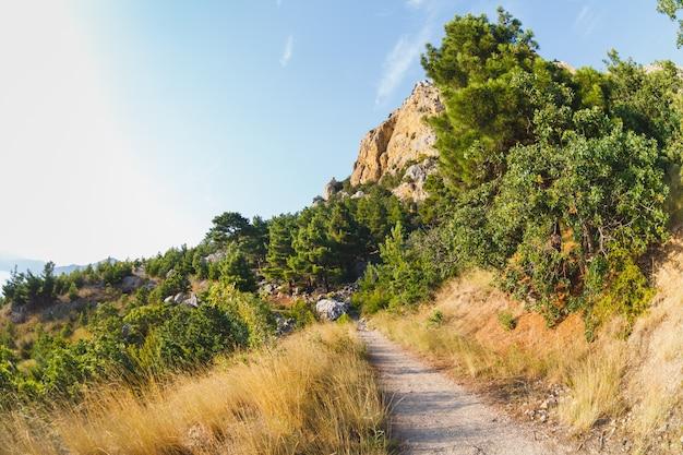 Het pad in de bergen door het struikgewas van jeneverbes. dagzon