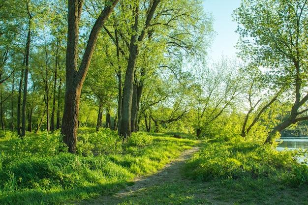 Het pad tussen de bomen en gras