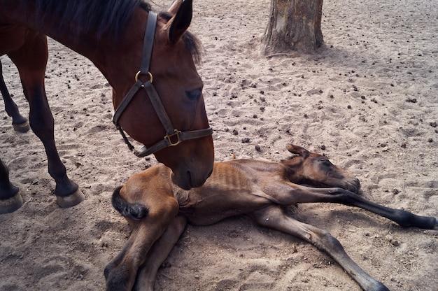 Het pasgeboren veulen en het moederpaard