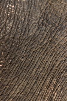 Het patroon dichte omhooggaand van de olifantshuid