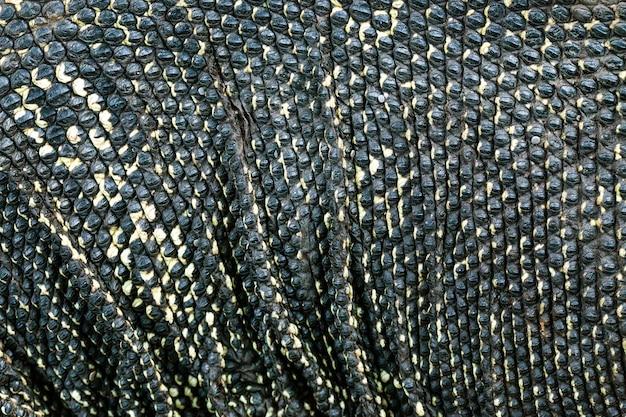 Het patroon en het oppervlak van de watermonitor.