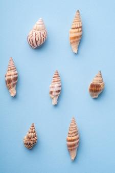 Het patroon van de de zomertextuur, spiraalvormige zeeschelp hoogste mening, blauwe achtergrond