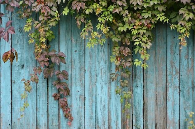 Het patroon van de herfstbladeren
