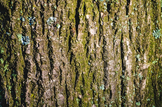 Het patroon van de schors van een boom met korstmos.