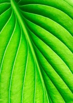Het patroon van een groen blad als achtergrond