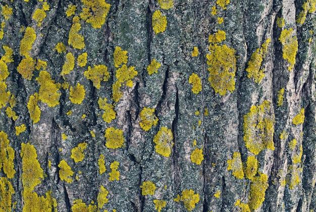 Het patroon van een houten schors met groene mos