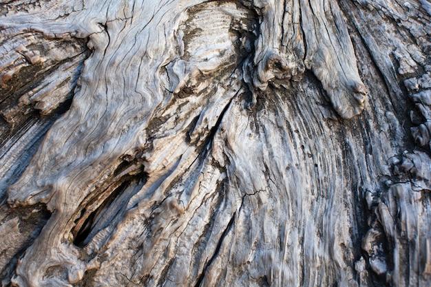Het patroon van golvende schors van de oude boom. oppervlak van hout in daglicht. detailopname