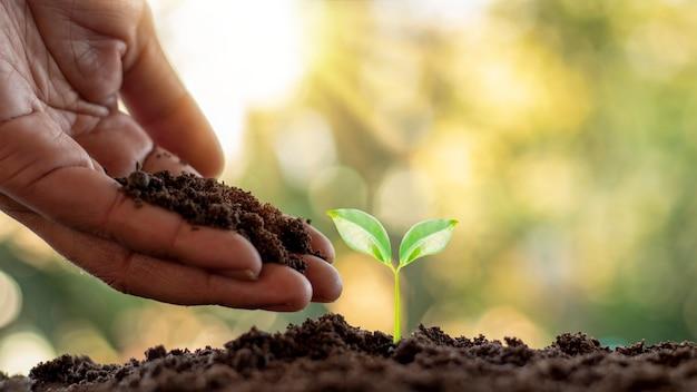Het planten van bomen en het planten van bomen, inclusief het handmatig planten van bomen door boeren, ideeën voor plantengroei.