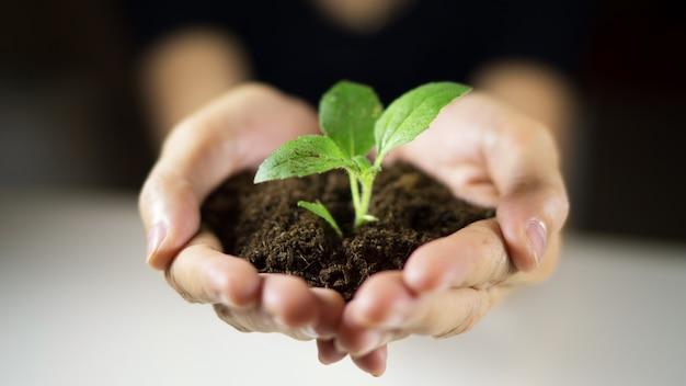 Het planten van de boom het groeien op grond in de hand van de vrouw voor het bewaren van wereldmilieu Premium Foto