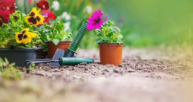 Het planten van een bloementuin, lente zomer. selectieve aandacht.
