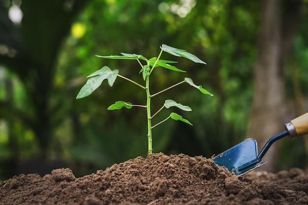 Het planten van jonge boom in tuin