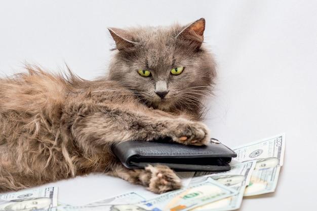 Het poesje is omringd door geld en houdt de portemonnee in zijn pootjes. succesvol bedrijf. tijd om te gaan winkelen