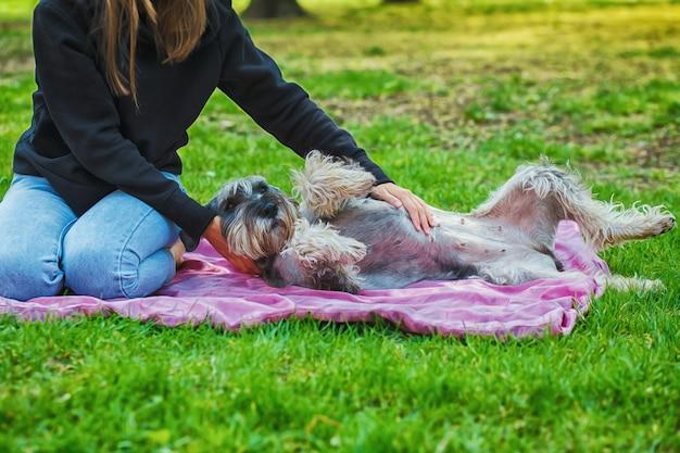 Het portret van eigenaar en de ruwe colliehond geniet van, rustend en petting samen op stadsstraat.