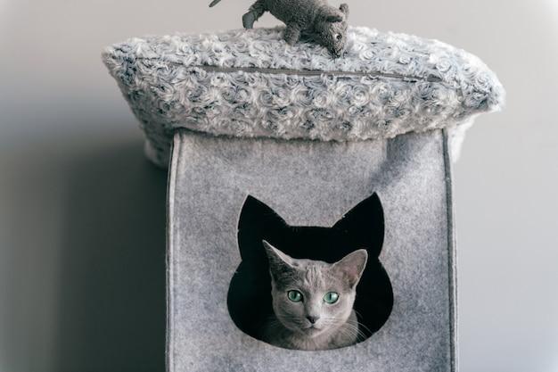 Het portret van grijs katje heeft pret met stuk speelgoed muis bij kattenhuis.