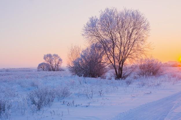 Het prachtige winterlandschap