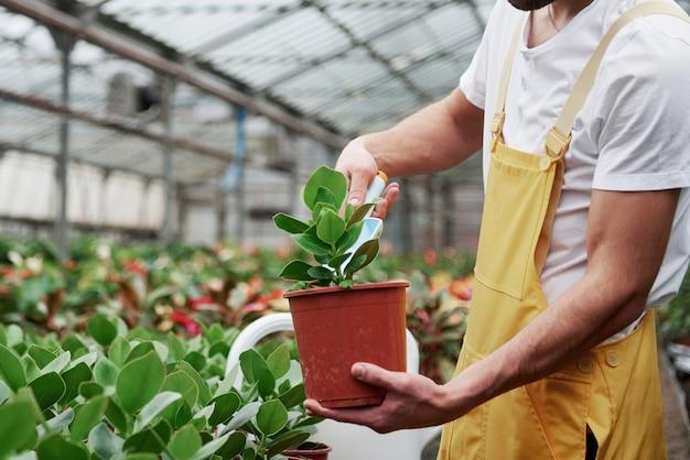 Het proces van het planten van bloemen is voorbij. man tuinman in geel en wit dragen werken met groene planten in vazen.