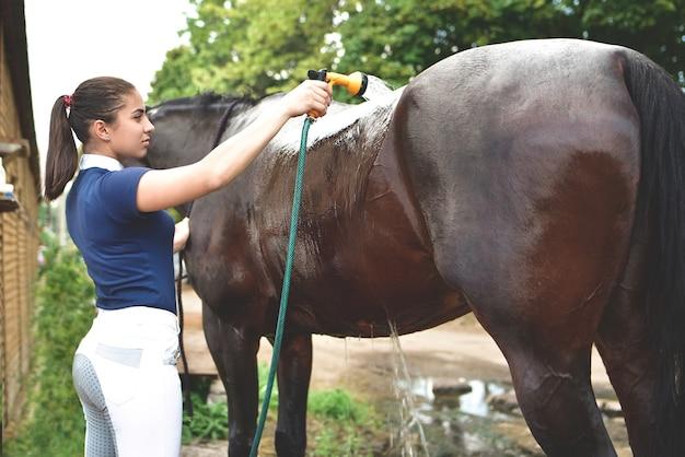 Het proces van het wassen van het paard met water uit een tuinslang, ter voorbereiding op de wedstrijd. recreatie