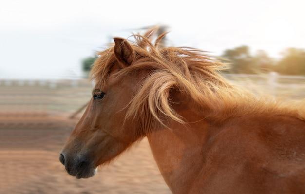 Het rennen van bruin paard dat op landbouwbedrijf in ochtend loopt