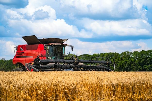 Het rode graan oogsten combineert op een zonnige dag