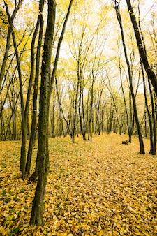 Het saaie weer in het herfstseizoen in de natuur, met de stammen van oude bomen