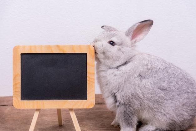 Het schattige kleine pasgeboren konijn heeft puntige oren