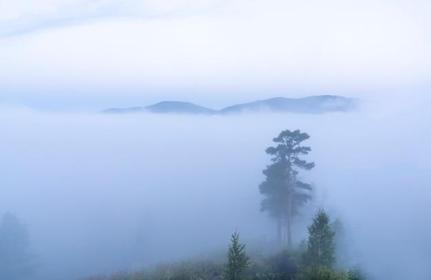 Het silhouet van bomen en heuvels in de mist vroeg in de ochtend voor zonsopgang in het bos minimalisme in l...