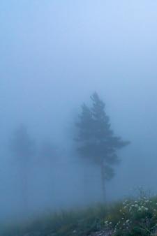 Het silhouet van een boom in de mist in de vroege ochtend in het bos voor zonsopgang mystiek licht en...