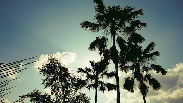 Het silhouet van palmen met de tuinpark van zonsondergangmeamo in lampang, thailand