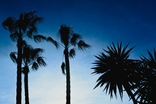 Het silhouet van palmen tegen backlight met blauwe hemelachtergrond, kopieert ruimtelijk vrij gebied.