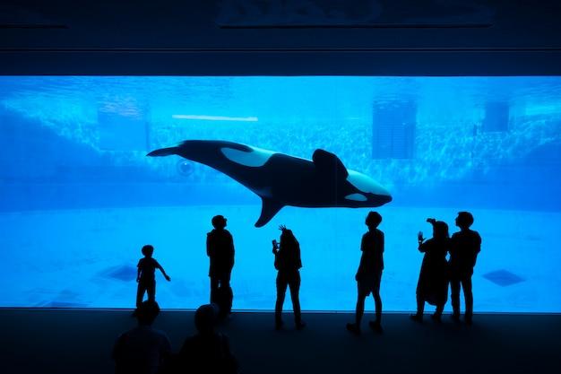 Het silhouet van toeristen die op een orka of moordenaarwalvis letten bij het aquarium.