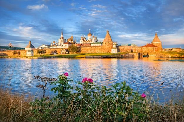 Het solovetsky-klooster op de solovetsky-eilanden, het blauwe water van de bay of prosperity en een bloeiende rozenbottelstruik