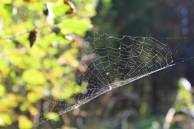 Het spinnenweb is 's ochtends in de zon bedekt met waterdruppels
