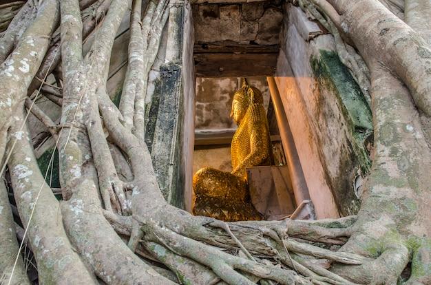 Het standbeeld van boedha in banyan-boom, thailand